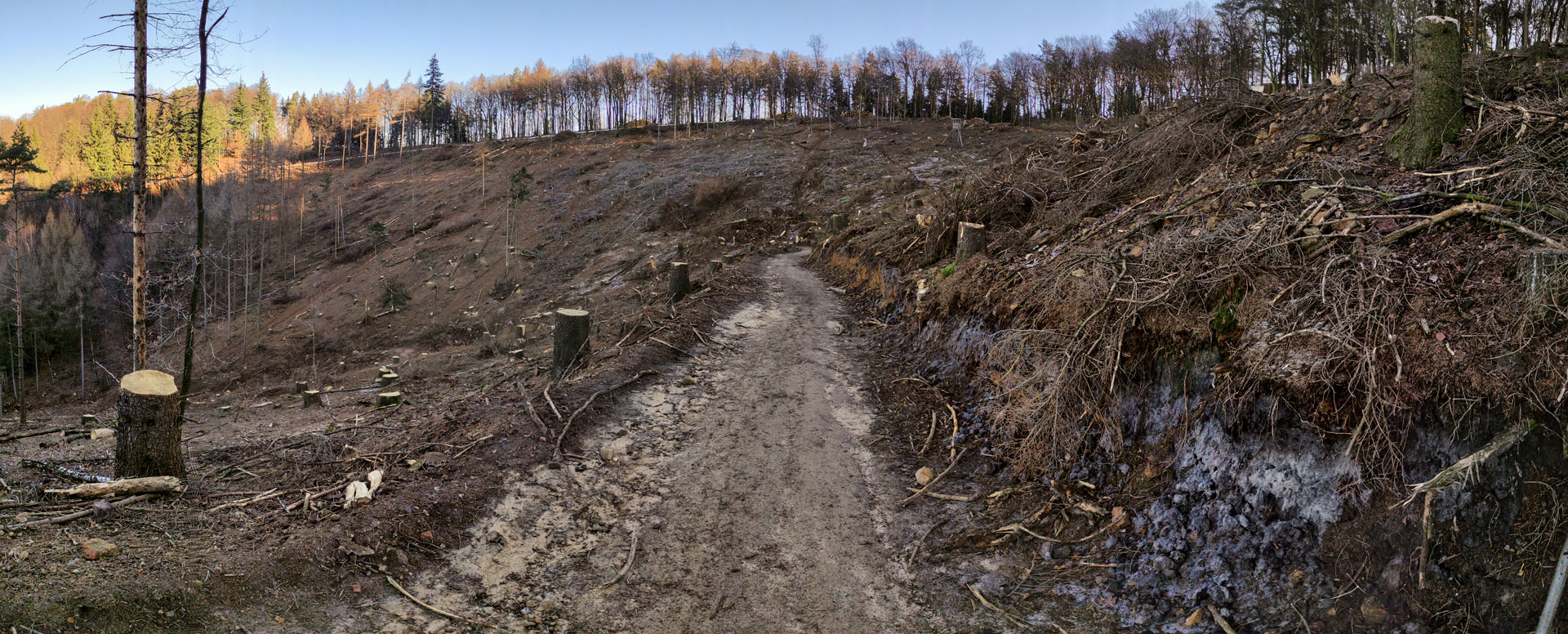 Panorama Teutoburger Wald abgeholzt