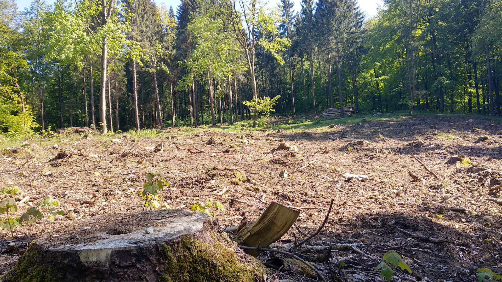 Bielefeld: Der Teutoburger Wald stirbt
