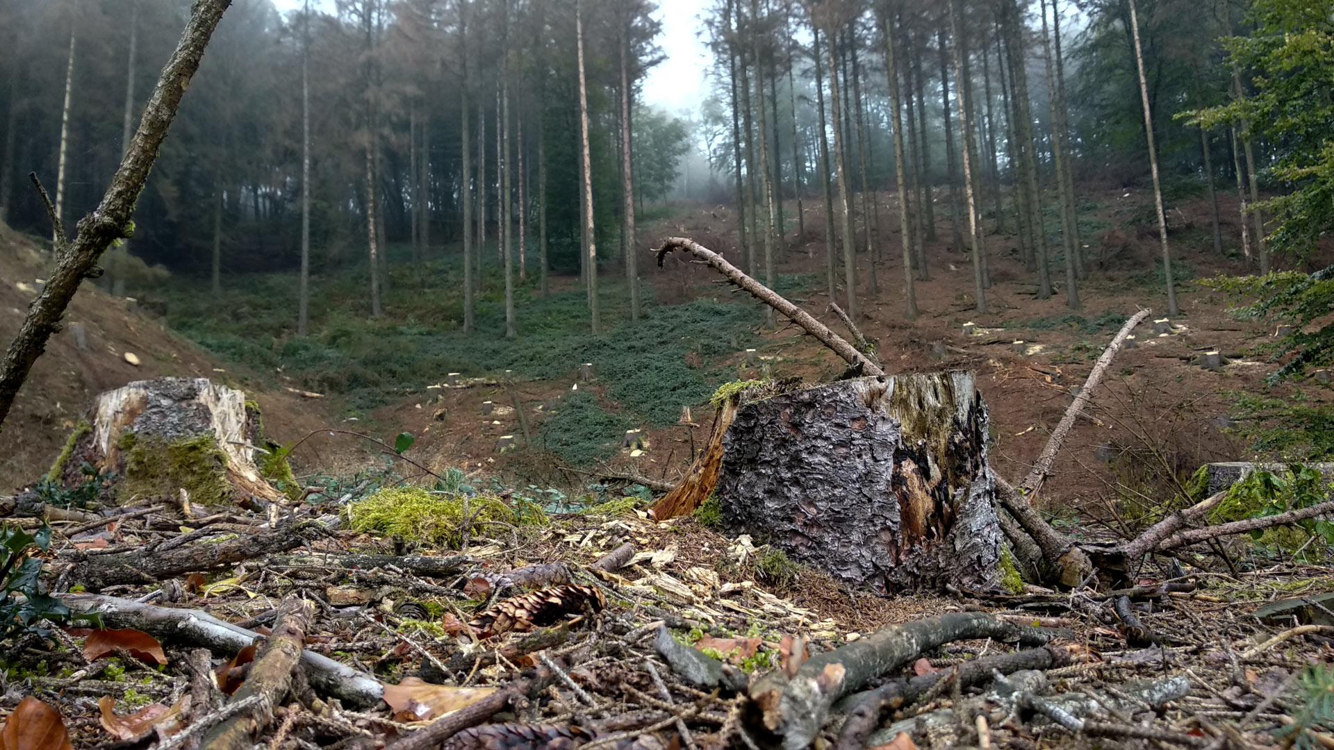 Teutoburger Wald abgeholzt